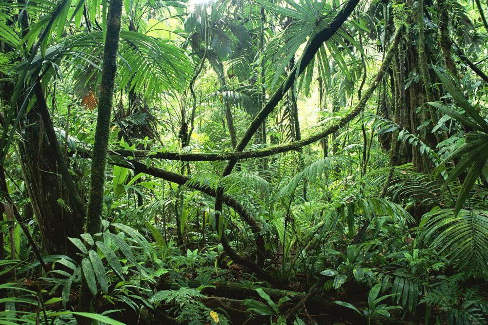 Džungla